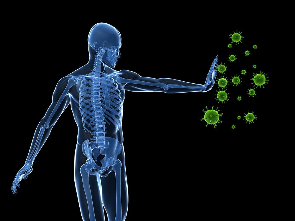 Immune System & Cancer
