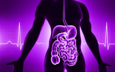 """What is """"Your Gut"""" and Why It's Important For Good Health?"""