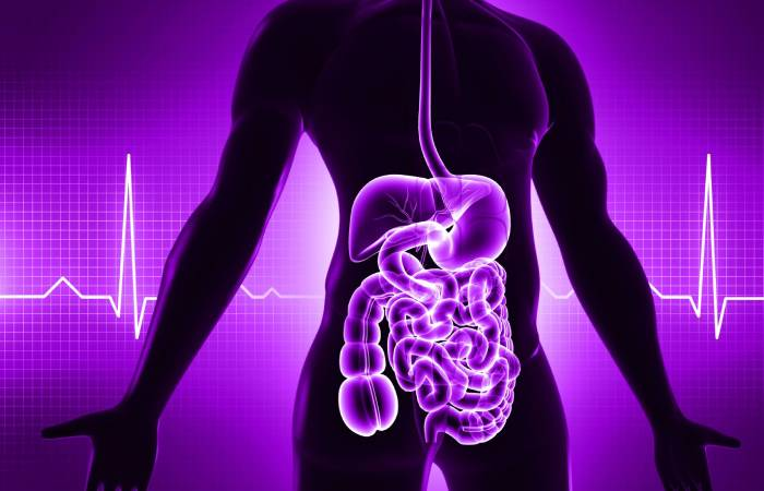 """What is """"Your Gut"""" and Why It's Important For Good Health"""